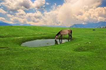 Shot of isolated horse drinking fresh water on the lake