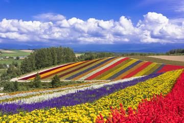 Fototapete - 美瑛パノラマロードのお花畑
