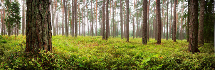 Lahemaa national park forest panorama