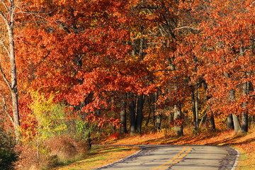 Drive through bright autumn trees