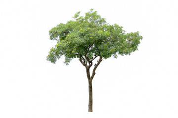tree isolated on white, bird on tree