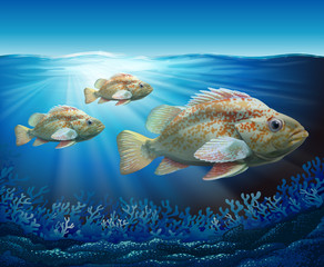 Groupers swimming in the ocean