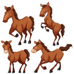 Brown horse in four different poses