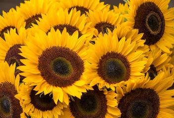 Closeup bunch of cut sunflowers at weekend market