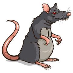 Rat 001
