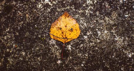 The leaf with the face on the asphalt autumn leaf