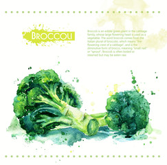 Broccoli. Raw vegetable. Watercolor illustration for design. Spray paint.