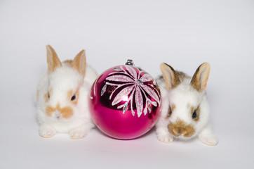 Palla di natale in mezzo a due coniglietti