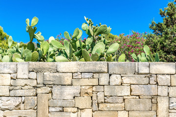 Cactuses behind the fence, Malta