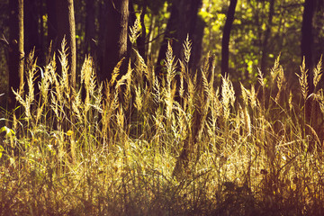 field of grass and forest in background. Retro or vintage filter