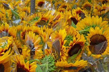 Sunflower Sale