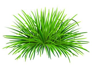 Bunch of green grass. Vector, isolated on white background.