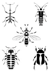 Decor insect illustration collection for design