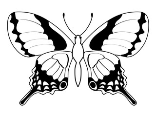 butterfly, insect