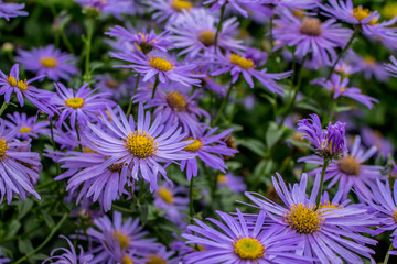 Bluish purple flowers.