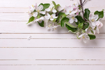 Apple blossom  on white painted wooden  planks.