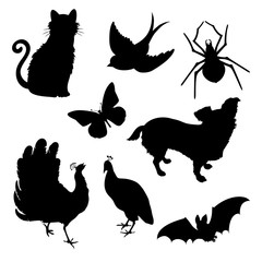 Vector set silhouettes : cat, bird, spider, butterfly, dog, peacock, bat