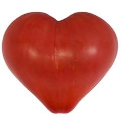 heart shape tomato isolated at white background