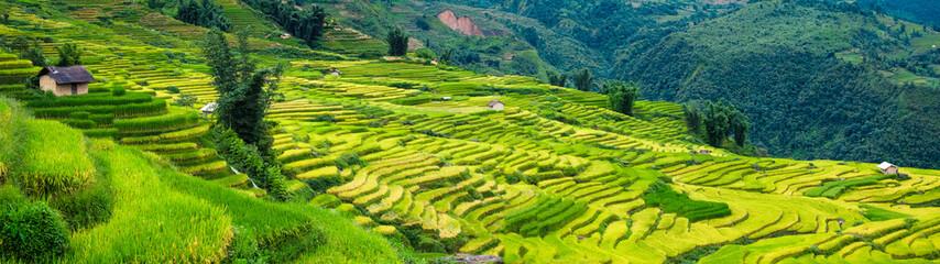 Rice fields on terraced in Sapa, Vietnam. Rice fields prepare the harvest at Northwest Vietnam.