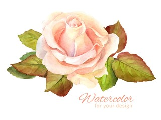 Rose watercolor. Vector illustration for greeting cards, invitations, and other printing and web projects.