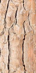 bark background or texture