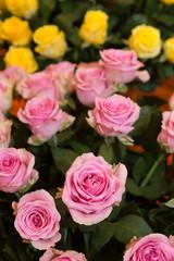 バラの切り花