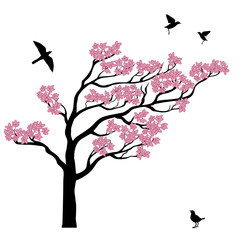 Silhoutte of sakura tree with birds