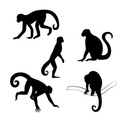 Capuchin monkey vector silhouettes.