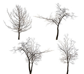 four isolated bare trees collection