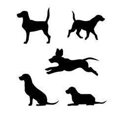 Breed of a dog beagle vector silhouettes.