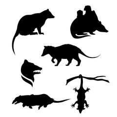 Vector silhouettes of a opossum.