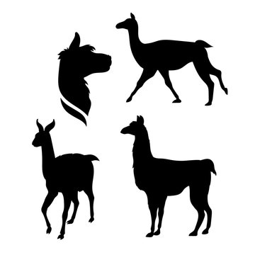 Vector silhouettes of a lama.