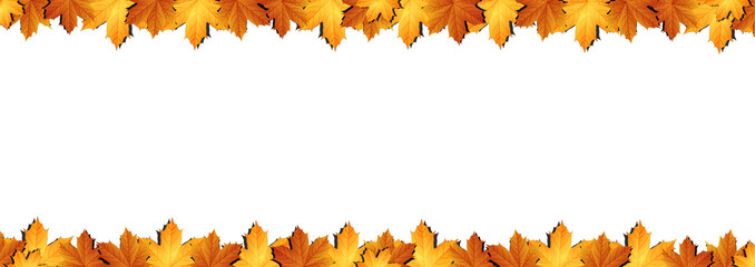 Horizontal  banner of autumn leaves