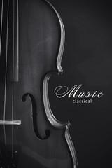 Classical violin. Black and white photo