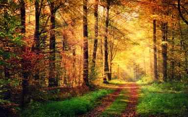 Spoed Fotobehang Honing Autumn forest scenery with rays of warm light