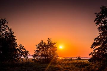 Tree silhouette in a sunrise