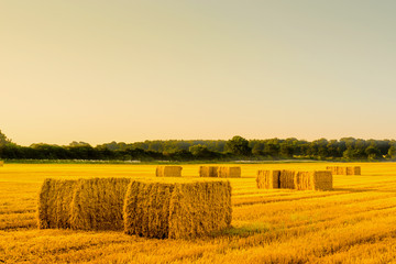 Straw bales in a countryside landscape