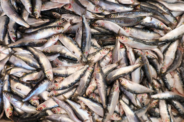 Group of dead small fish caught by fishermen