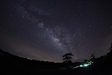 Silhouette of Tree and Milky Way Phu Hin Rong Kla National Park,