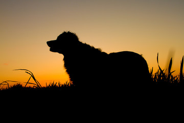 A silhouette of a dog standing on a meadow