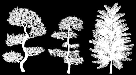 three south pine silhouettes isolated on black
