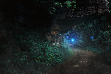 Dark path in the forest to the fairy realm