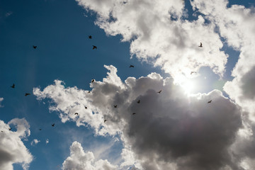 A large group of pigeons against dramatic sky.