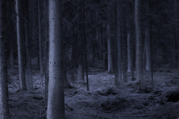Dark spooky forest