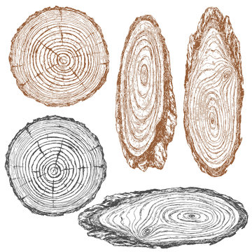 Wood texture of trunk tree sketch