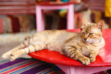 sleeping redhead cat