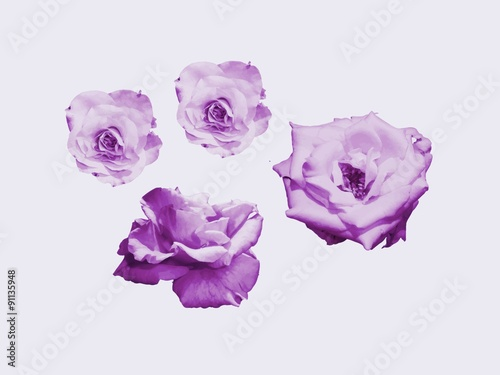 Fleurs Dessin Couleur Violette Stock Photo And Royalty Free Images