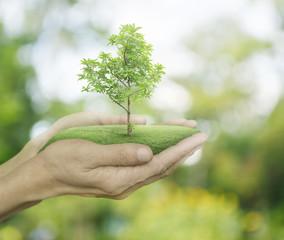 Growing green tree in hands on green bokeh background