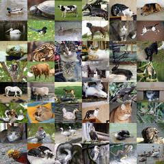 Set of 48 animals photos