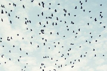 Fåglar Fotobehang